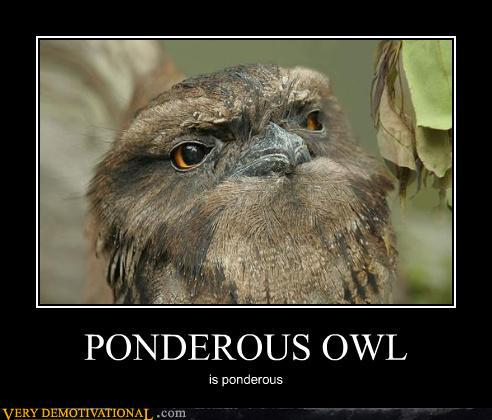 Demotivational posters ponderous owl